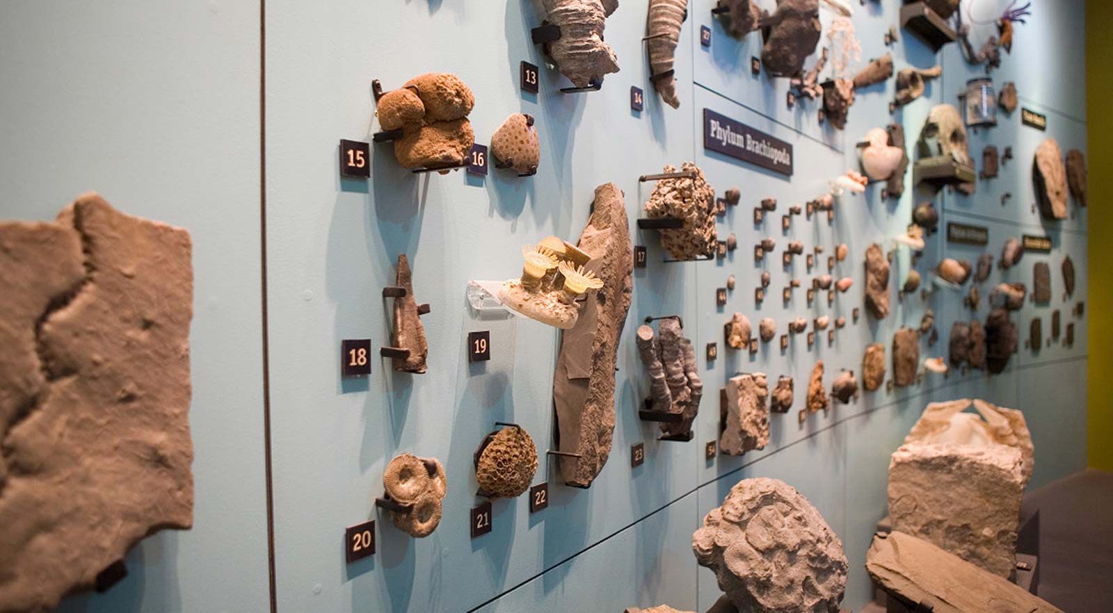 Fossils displayed mounted on a wall